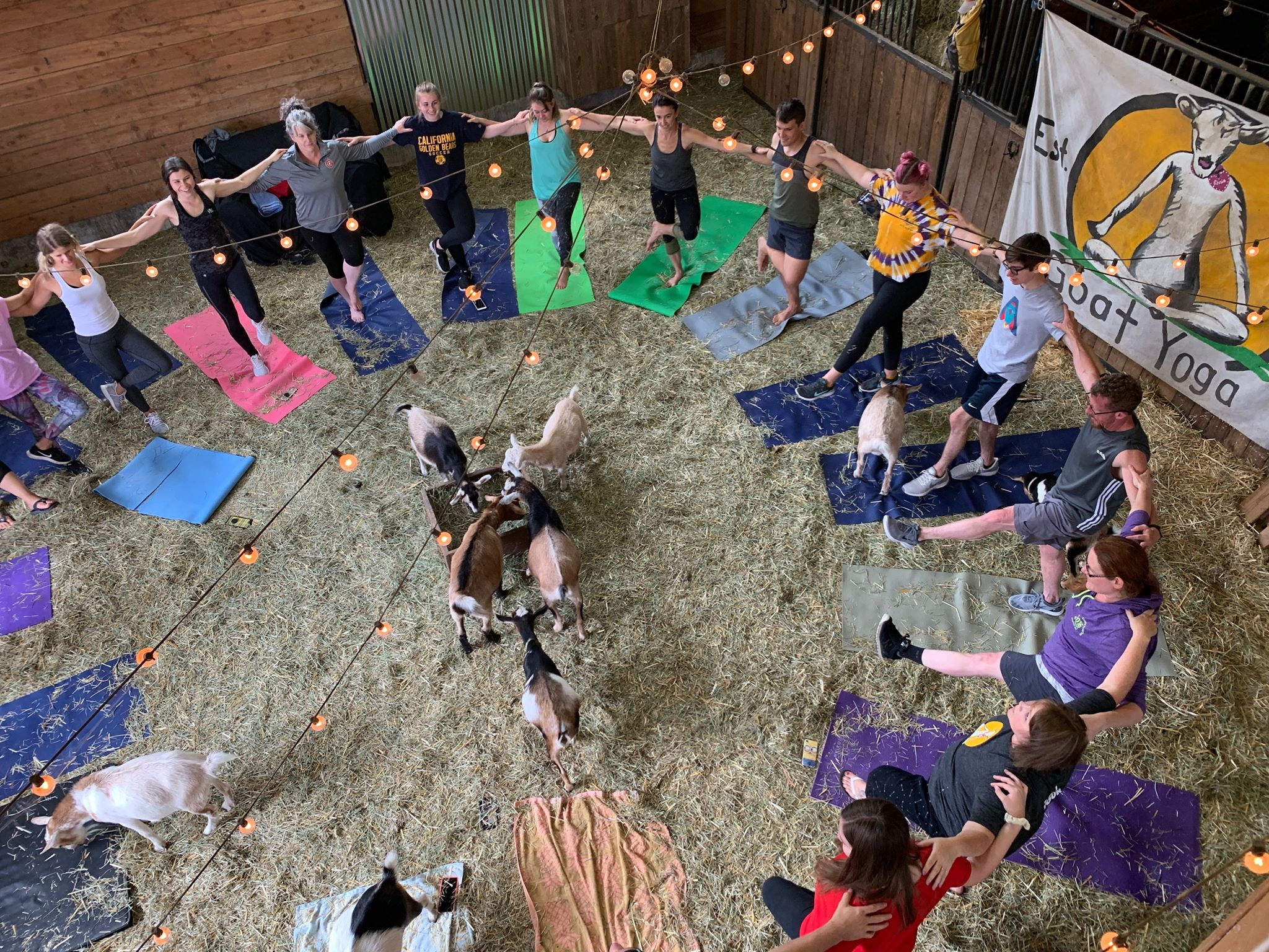 Oregon City Goat Yoga